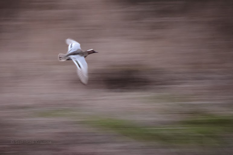 Repülés - Fotó:Szakolcai Krisztina