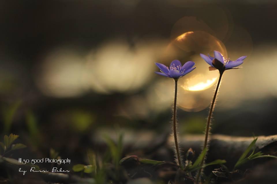 Májvirágok - Fotó:Békés Fruzsina