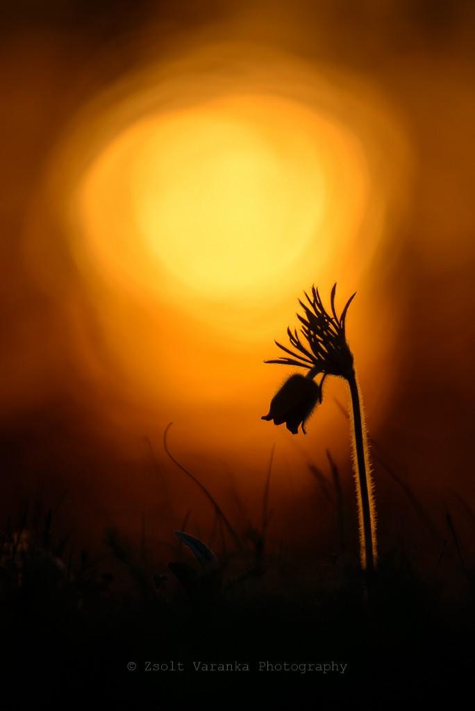 Szeretném, ha a Golden Night - fotó: Szeretném, ha a Golden Night - fotó: Varanka Zsolt